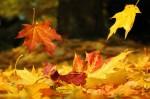 come-utilizzare-foglie-secche-decorare-casa-cura-orto-giardino3-640x425